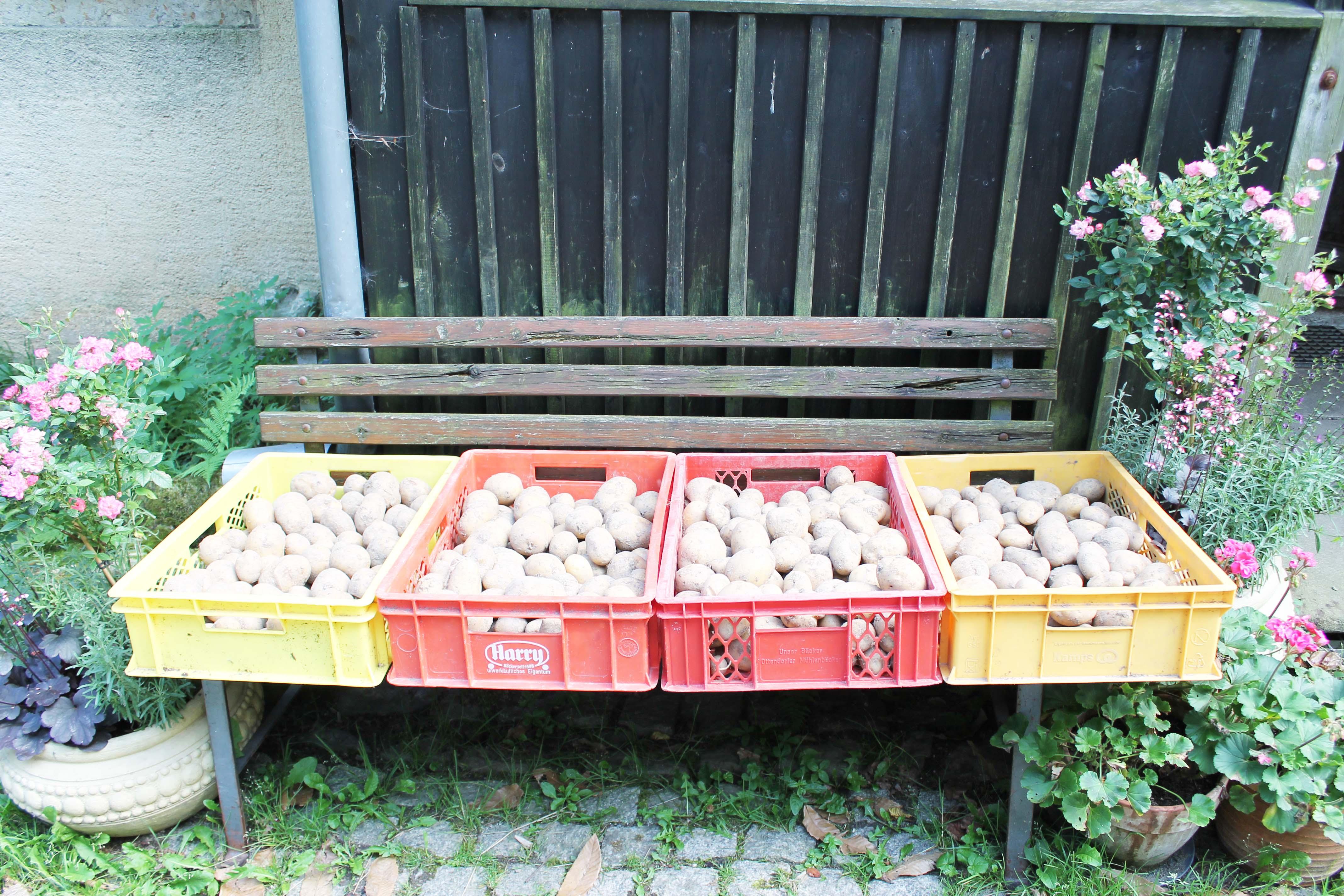 Kartoffeln-07