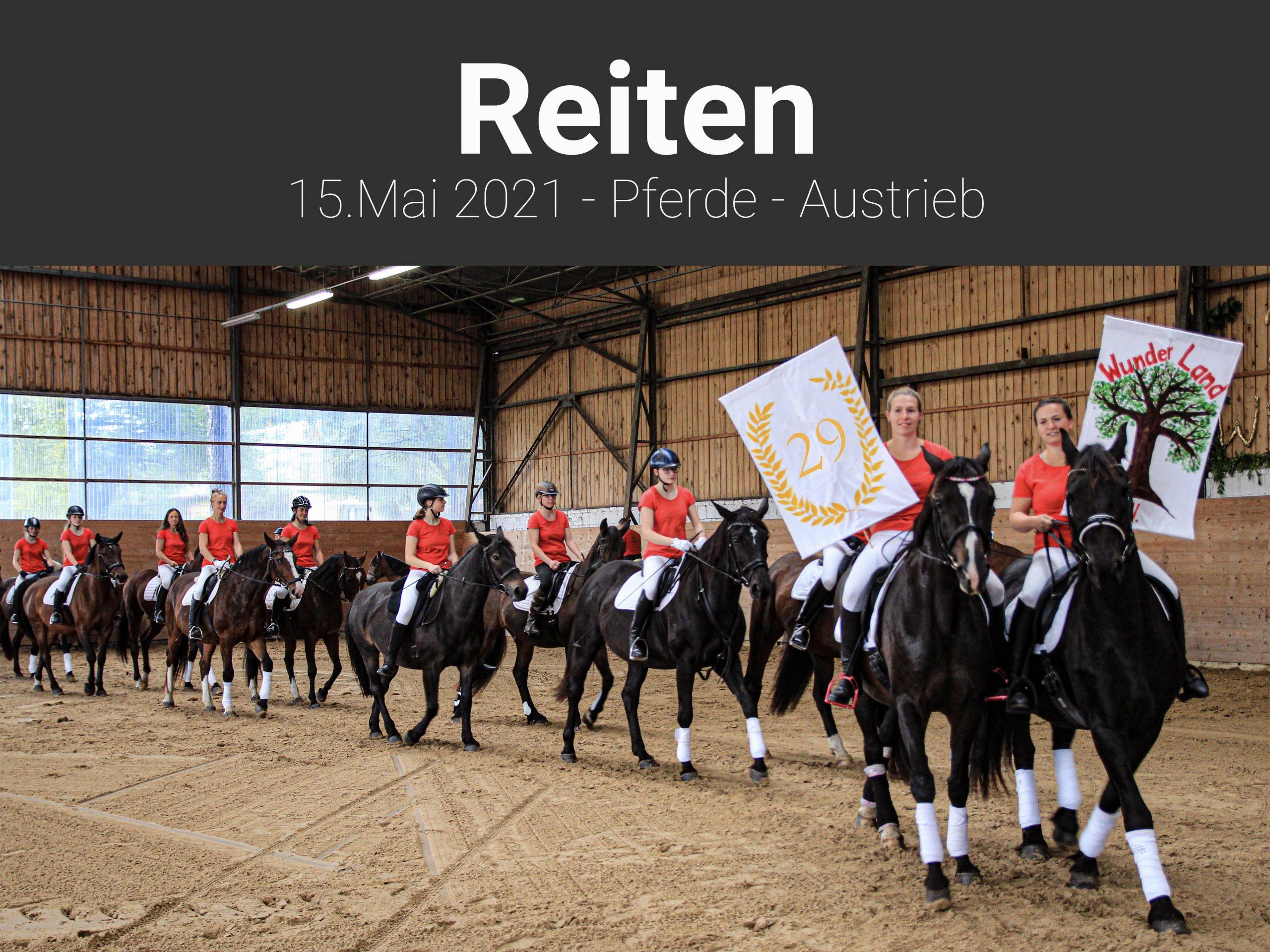 Reiten-Pferdeaustrieb